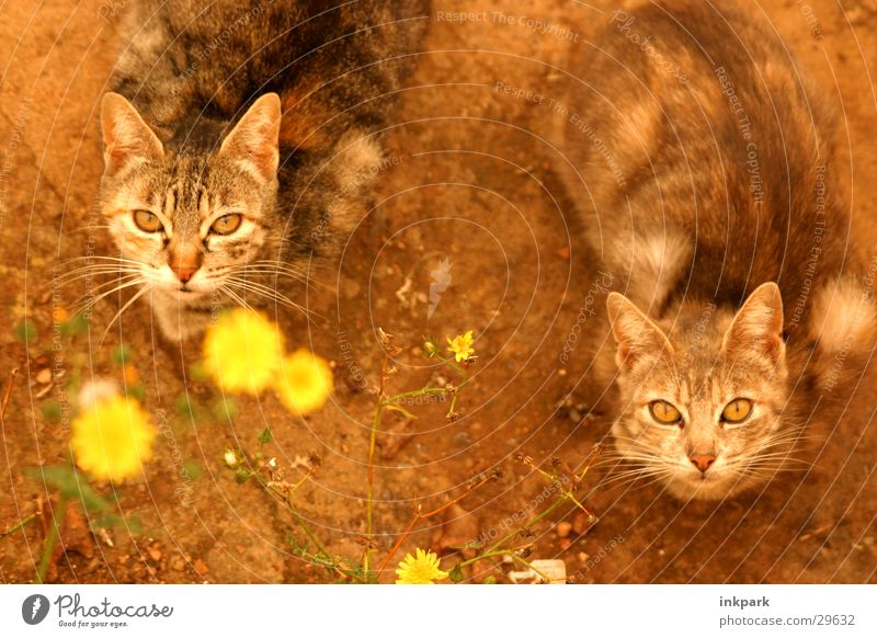 Katzenjammer Sonnenuntergang Blume Erwartung Verkehr Blick Ernährung warten Mietzen