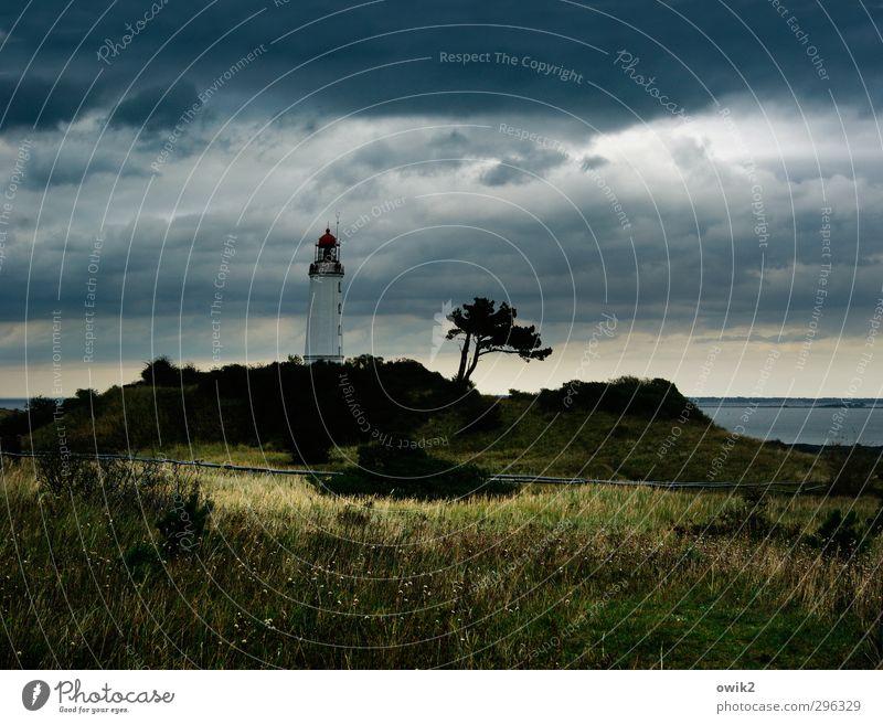 Herbst auf Hiddensee Natur Ferien & Urlaub & Reisen Wasser Pflanze Landschaft Umwelt Ferne dunkel Gras Freiheit Küste Horizont Wetter Klima Insel