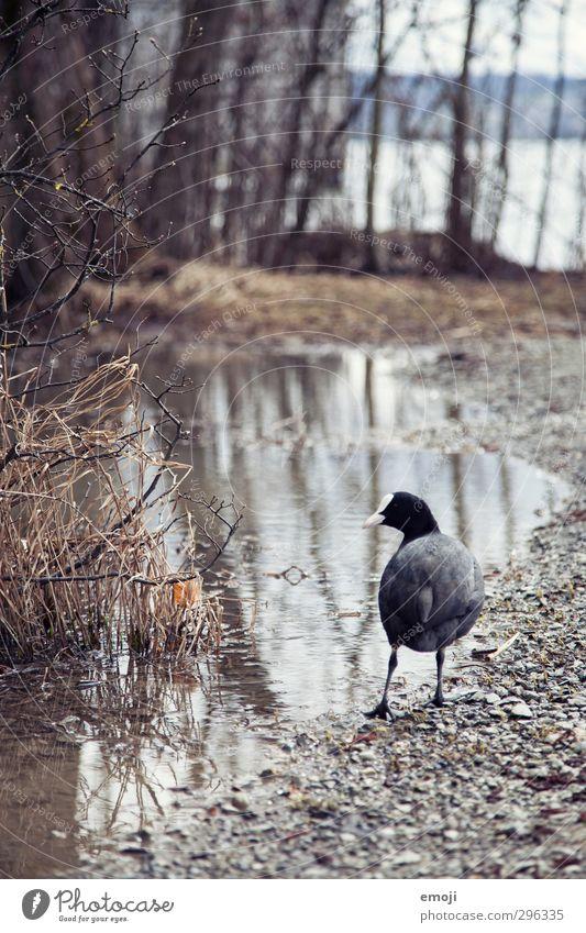 Privatpool Natur Wasser Landschaft Tier Umwelt grau natürlich nass trist Ente schlechtes Wetter