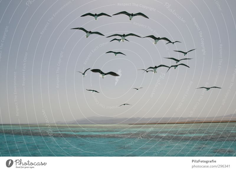 Schwärmen Himmel Natur blau Ferien & Urlaub & Reisen grün Wasser Sommer Sonne Meer Strand Küste Vogel fliegen Wellen Insel Schönes Wetter