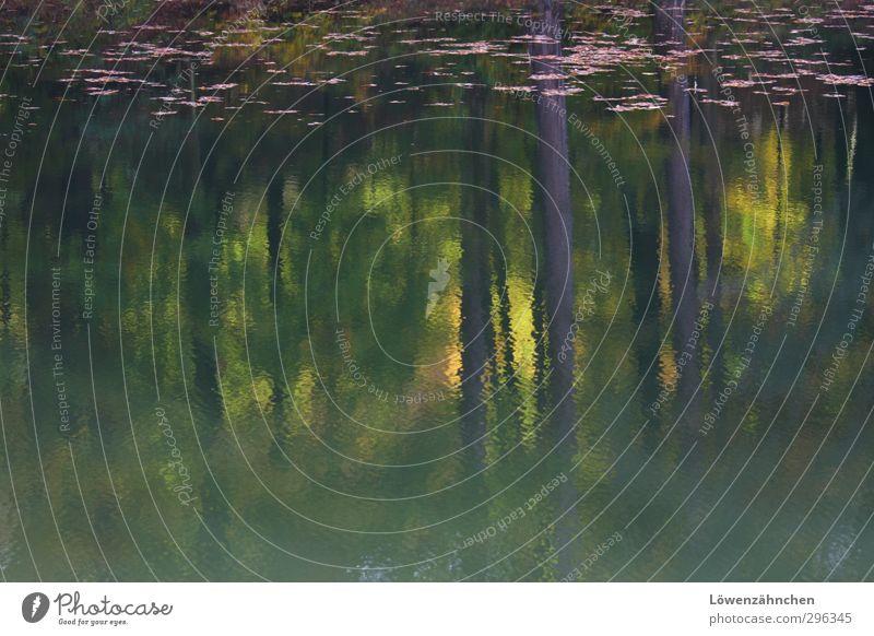 blurred reflection Natur Wasser Pflanze Baum Landschaft Blatt ruhig Erholung Wald Umwelt Herbst Traurigkeit See Stimmung Zufriedenheit Schönes Wetter