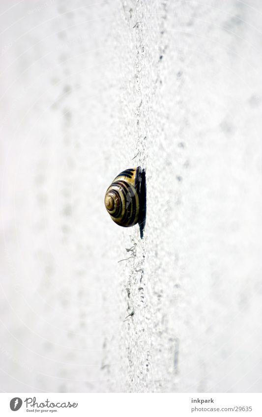 ein langer Weg langsam Wand Haus Verkehr Schnecke Wege & Pfade tief