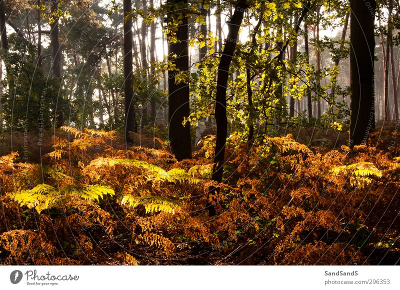 Waldlicht Herbst Baum Blatt braun gelb Farbe fallen Wurmfarn Licht Sonnenschein Holz Außenaufnahme