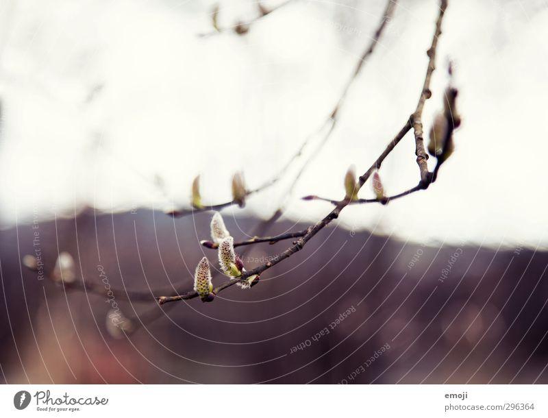 vorsichtig Natur grün Pflanze Baum Frühling natürlich Sträucher Ast Blühend