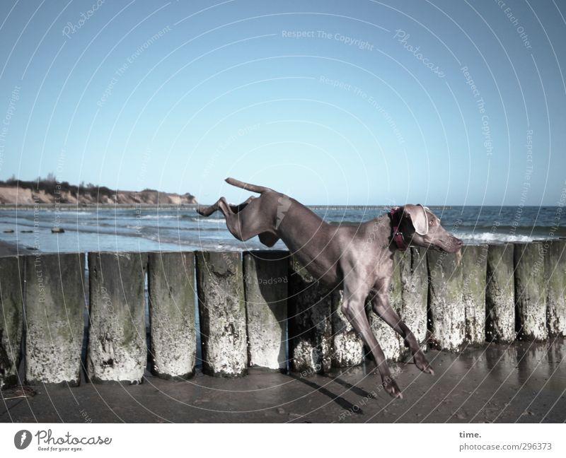 Strandspocht Himmel Frühling Küste Ostsee Buhne Tier Haustier Hund 1 springen elegant sportlich Lebensfreude Frühlingsgefühle Begeisterung Abenteuer ästhetisch