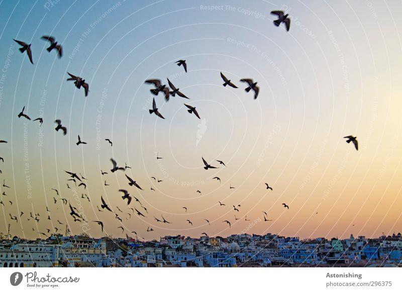 Aufbruch! Himmel blau Ferien & Urlaub & Reisen Stadt Tier Haus Wand Mauer Gebäude Horizont Reisefotografie Vogel orange Wetter fliegen Schönes Wetter
