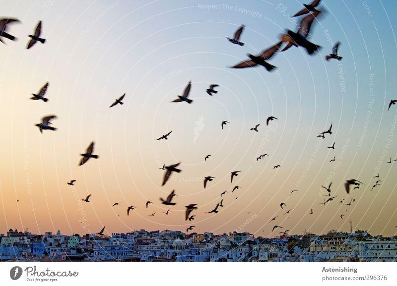 Aufbruch II Himmel blau Stadt Tier Haus gelb Wand Mauer Gebäude Luft Reisefotografie Vogel orange Wetter fliegen gold