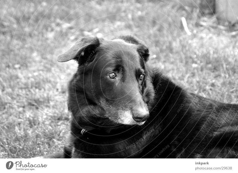 Auf den Hund gekommen schwarz träumen Hund Denken Verkehr