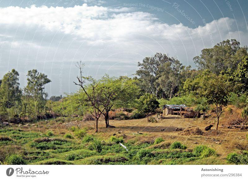 Landwirtschaft in Indien Umwelt Natur Landschaft Pflanze Erde Himmel Wolken Frühling Wetter Schönes Wetter Wärme Baum Gras Sträucher Blatt Grünpflanze