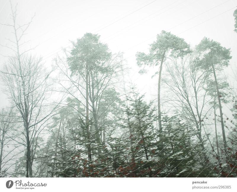 flüchtiges grün Natur grün Baum nackt Landschaft Winter Wald Ferne Frühling Nebel Geschwindigkeit dünn türkis Tanne Kiefer Bodensee