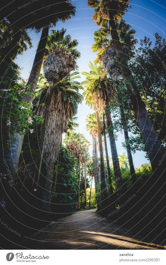Palm Pflanze Sommer Schönes Wetter Baum Palme Park Zufriedenheit Erholung exotisch Ferien & Urlaub & Reisen Idylle Natur Perspektive Stimmung Umwelt