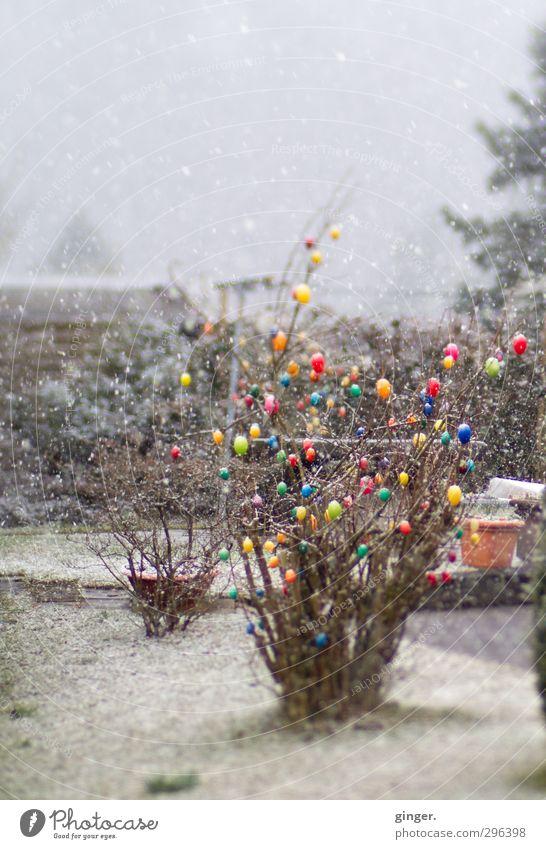 Als Ostern und Weihnachten auf einen Tag fielen Natur weiß Pflanze Winter Umwelt Schnee Frühling grau Feste & Feiern Garten Schneefall außergewöhnlich Wetter