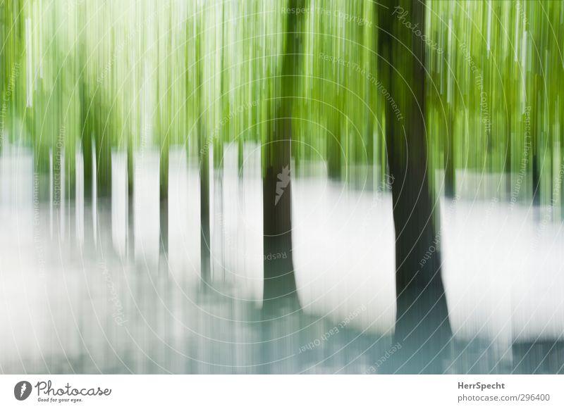 Frühling (Freudensprung) Sommer Schönes Wetter Baum Grünpflanze Park Wald ästhetisch außergewöhnlich braun grau grün Allee Baumstamm Bewegungsunschärfe vertikal