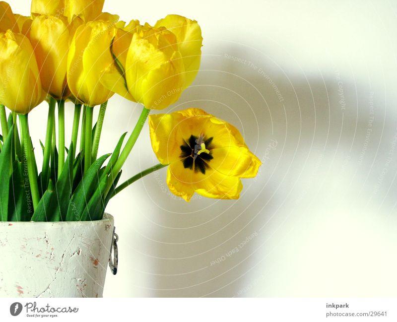 Schau mich an Blume grün Pflanze gelb Dekoration & Verzierung Tulpe Vase