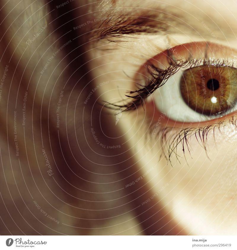 Auge schön Körper Haare & Frisuren Haut Wimperntusche 1 Mensch 13-18 Jahre Kind Jugendliche 18-30 Jahre Erwachsene beobachten nah natürlich Neugier braun