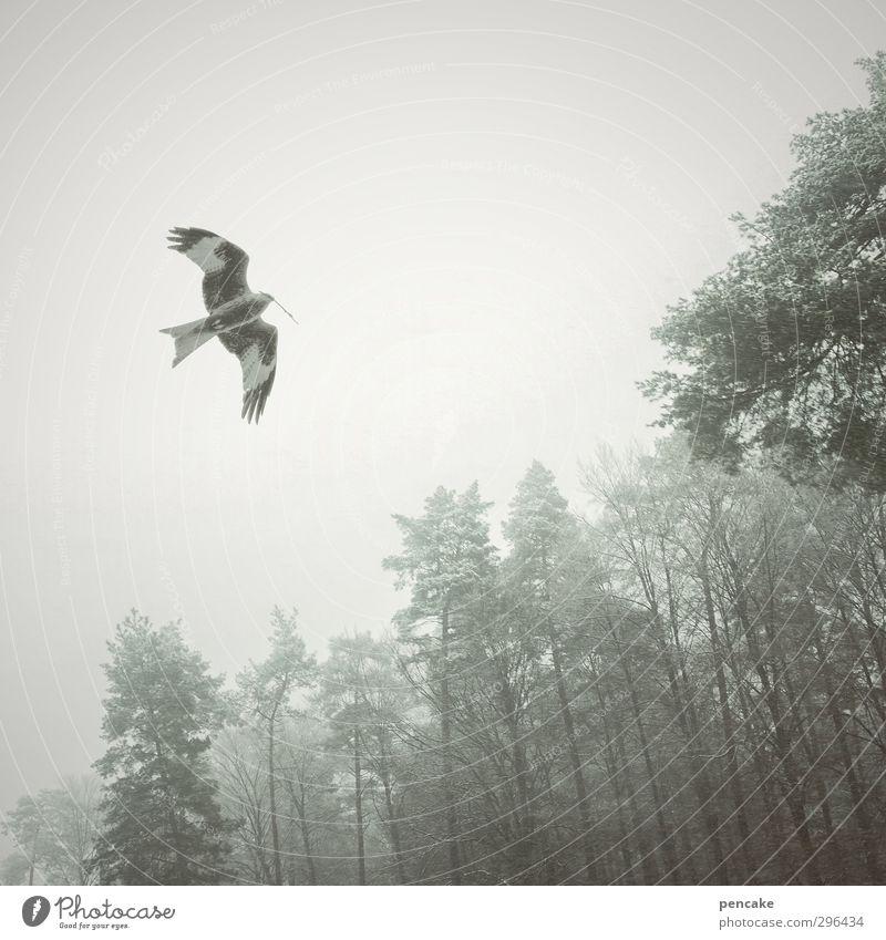 der milan Natur Landschaft Frühling Baum Wald Tier Wildtier Vogel 1 Zeichen atmen Brunft bauen fliegen füttern träumen Wachstum Milan Horst Roter Milan