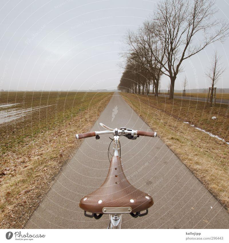 hätte, hätte, fahrradkette Natur Baum Landschaft Winter Umwelt Wiese Straße Frühling Wege & Pfade Wetter Feld Fahrrad Klima Freizeit & Hobby Verkehr Lifestyle