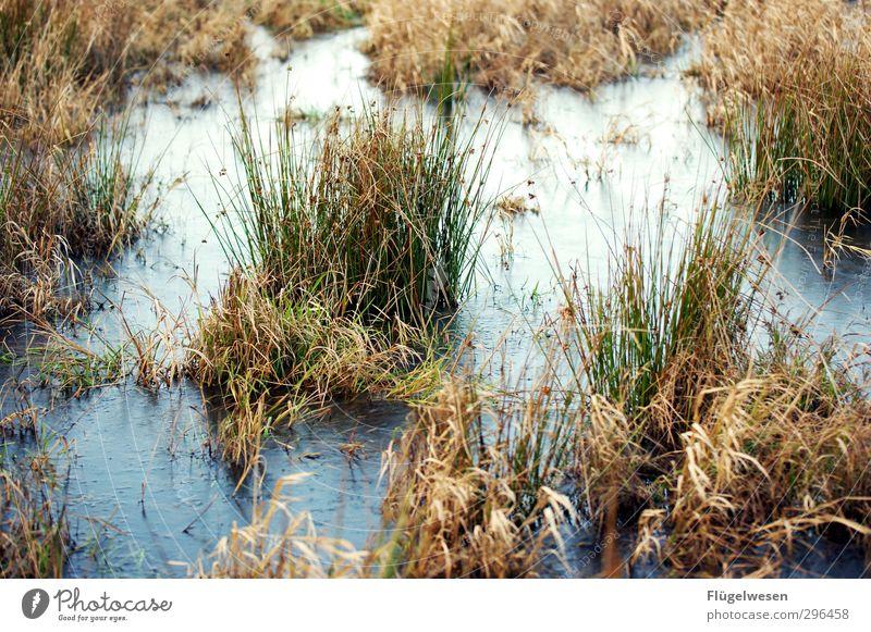 give me Moor Ferien & Urlaub & Reisen Ausflug Umwelt Natur Landschaft Pflanze Tier Urelemente Erde Herbst Winter Klima Baum Blume Gras Sträucher Moos Efeu Farn