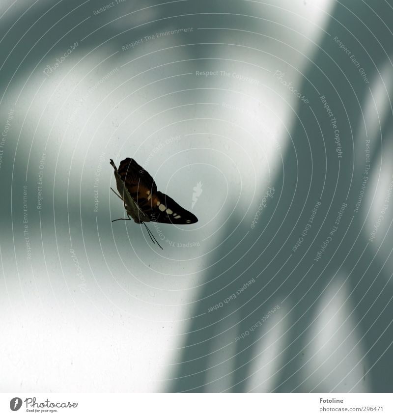 Alter Falter! Umwelt Natur Tier Wildtier Schmetterling Flügel 1 exotisch hell nah natürlich schön Fensterscheibe Farbfoto Gedeckte Farben Innenaufnahme