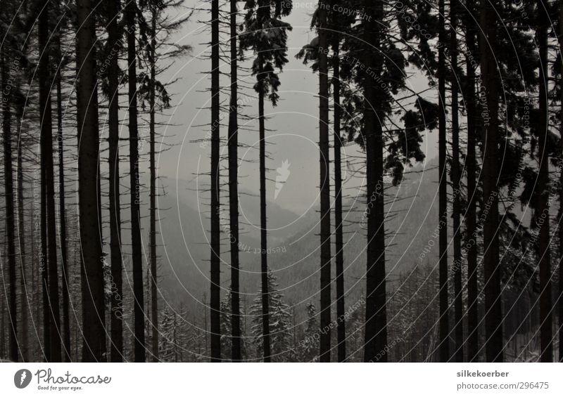 Wald Natur Landschaft Winter Nebel Schnee Baum Hügel Berge u. Gebirge Harz dunkel gruselig natürlich grau schwarz weiß kalt grauenvoll Schwarzweißfoto
