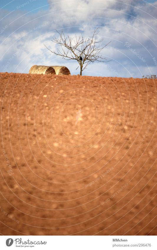 Lenz Himmel Natur Baum Wolken ruhig Frühling Horizont braun liegen Feld Erde warten Wachstum Beginn Hoffnung Landwirtschaft