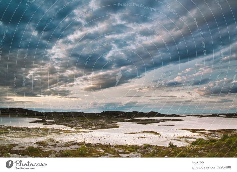 Wetterwechsel Himmel blau Pflanze grün schön Sommer Wasser weiß Landschaft ruhig Wolken Tier kalt Leben Bewegung Gras