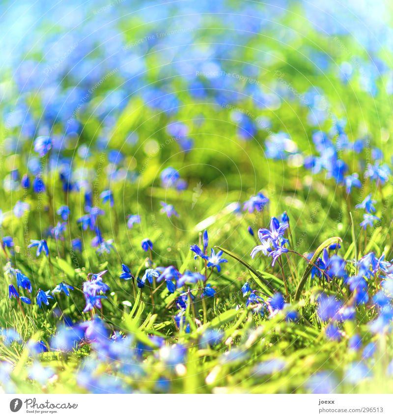 Neubeginn Natur blau grün schön Pflanze Blume Wiese Frühling hell Schönes Wetter frisch