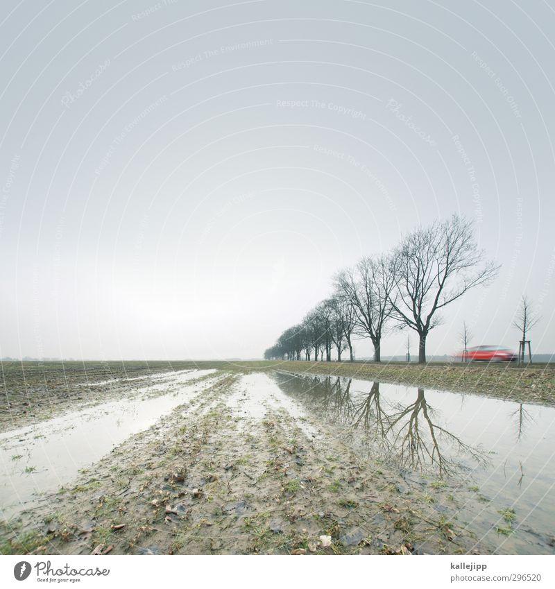 in brandenburg gegen einen baum gegurkt Natur Baum rot Einsamkeit Landschaft Winter Straße Wege & Pfade PKW Feld Klima Verkehr Lifestyle Geschwindigkeit fahren