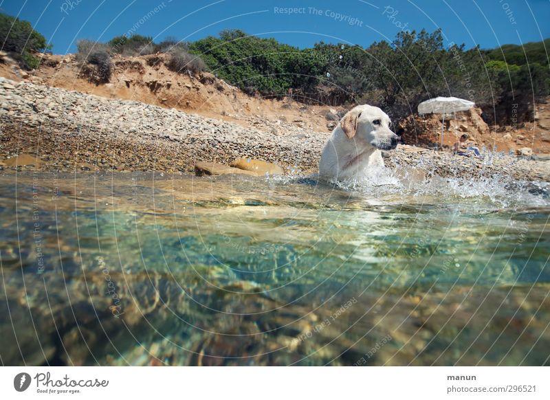 Wasserratte Hund Mensch Ferien & Urlaub & Reisen Wasser Sommer Sonne Meer Freude Tier Strand Erholung Wärme Spielen Junge Küste authentisch