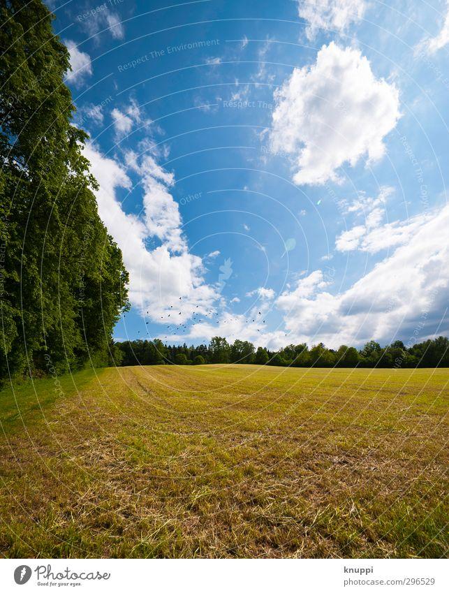 on the sunny side of life Himmel Natur blau Ferien & Urlaub & Reisen grün schön weiß Sommer Pflanze Baum Sonne Landschaft Wolken ruhig Wald Umwelt