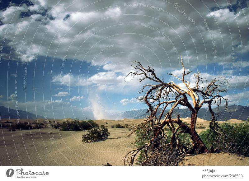 das tool des tadels. Sand heiß Wüste Death Valley National Park Baum Tod Totholz trocken Trockengebiet Düne Menschenleer Einsamkeit vertrocknet Wärme