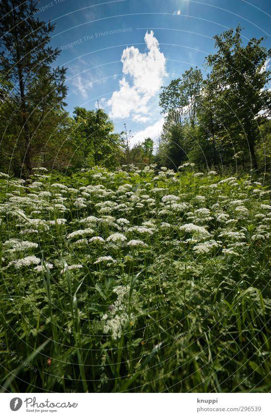 Frühling Umwelt Natur Landschaft Pflanze Luft Himmel Wolken Sonne Sommer Schönes Wetter Baum Blume Grünpflanze Wildpflanze Wiese Wald frisch nah schön Wärme