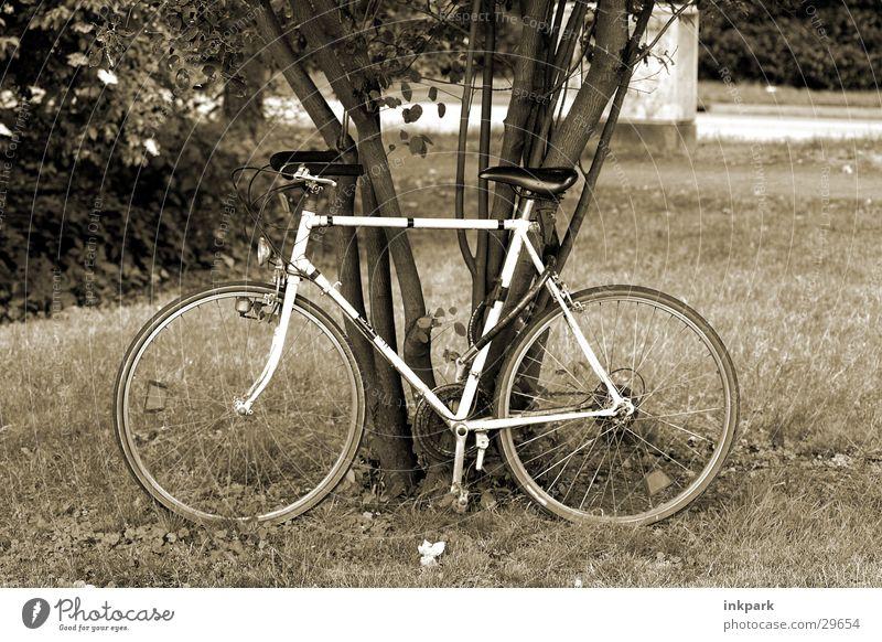 Schnell gewesen Baum Erholung Wiese Sport Fahrrad fahren