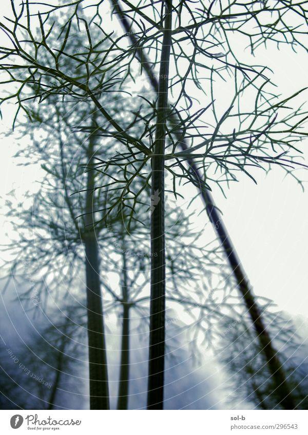 Bäume? Garten Natur Pflanze Nutzpflanze Wachstum dünn grün weiß Stengel Zukunft künstlich Gewächshaus Verbindung unübersichtlich Neurologie nah Geäst Illusion