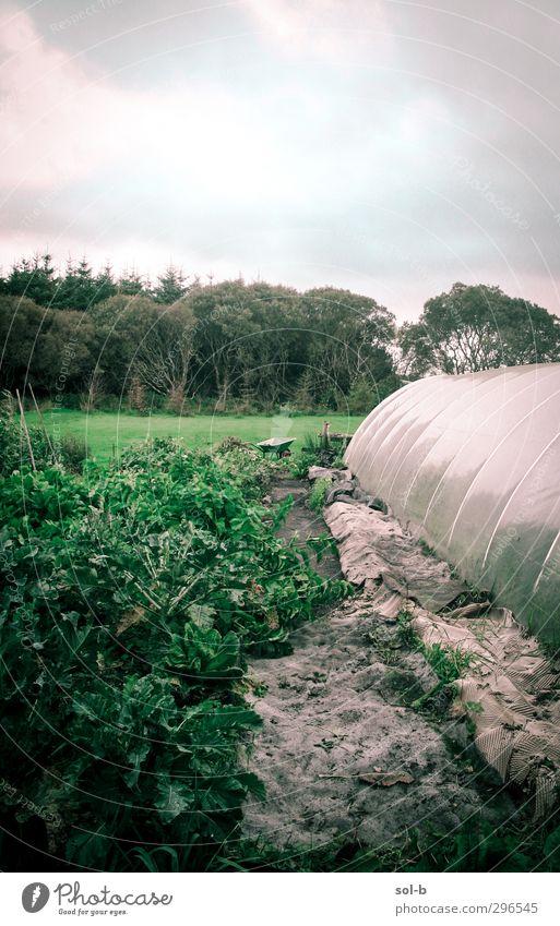 Garten in Mayo Lebensmittel Gemüse Salat Salatbeilage Ernährung Bioprodukte Vegetarische Ernährung Häusliches Leben Gartenarbeit Landwirtschaft Forstwirtschaft