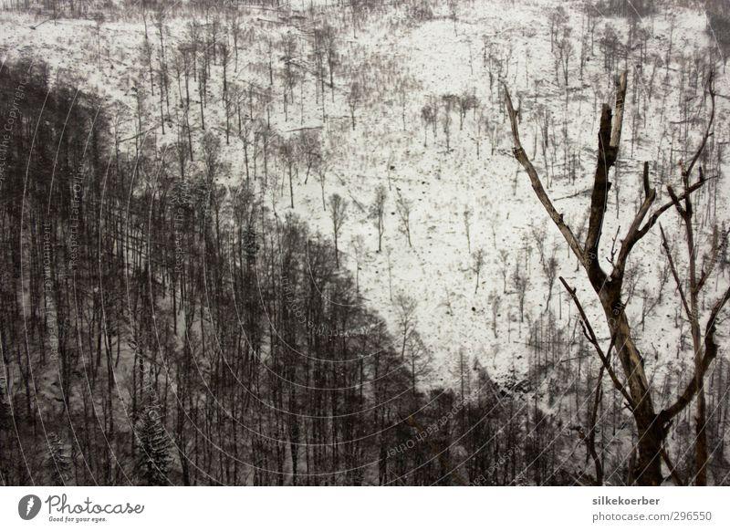\ Natur weiß Pflanze Baum Landschaft Winter schwarz Wald Umwelt dunkel Schnee grau Erde Klima trist kaputt