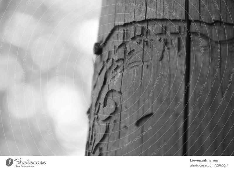 immortal in time Natur alt schön ruhig Umwelt Liebe Holz klein natürlich Stimmung ästhetisch einzigartig Zeichen Ewigkeit Idee geheimnisvoll