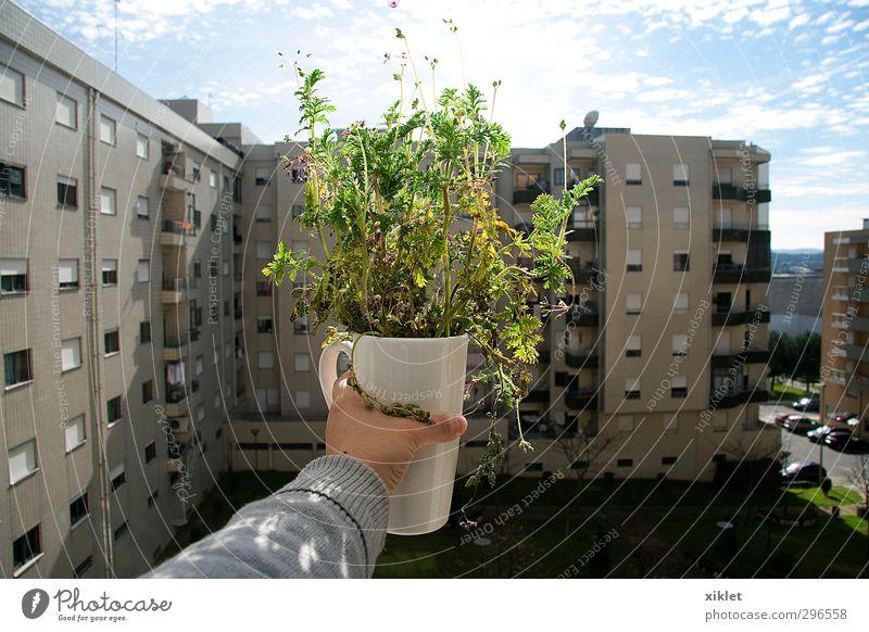 Himmel blau grün schön Stadt Blume Wolken Leben feminin Gefühle lachen Glück Gebäude grau Garten Wohnung