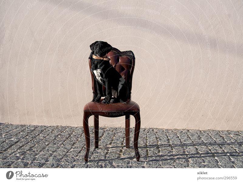 Hund Tier ruhig schwarz Haus Spielen Garten Freundschaft sitzen elegant Schönes Wetter Stern Bildung Stuhl Haustier Respekt