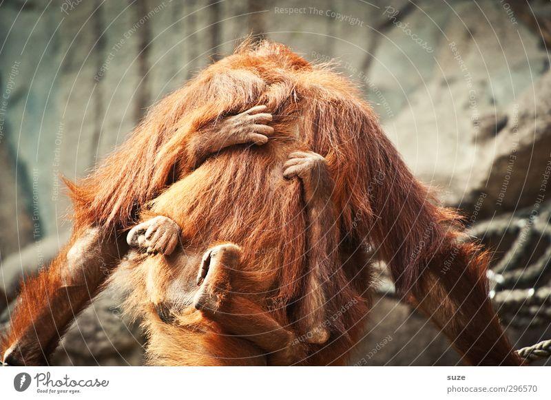 Lieb hamm Tier Tierjunges Gefühle grau braun Wildtier Sicherheit festhalten Fell Vertrauen tierisch Geborgenheit kuschlig Affen Sympathie Tierliebe