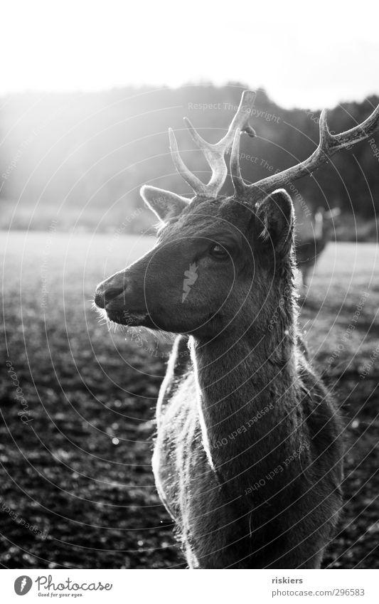 auf der anderen seite des zauns Tier ruhig Umwelt Gefühle Frühling natürlich Stimmung Feld Kraft Wildtier warten stehen leuchten beobachten Neugier Vertrauen