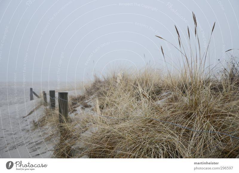 Ostsee-Tristesse Meer Natur Küste Strand Blick warten frei kalt trist gold grau ruhig Sehnsucht Fernweh Einsamkeit Stranddüne Dünengras Dunst graue Wolken