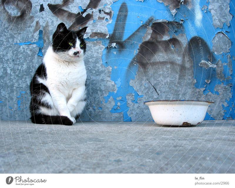 cat Beton Katze Industrie grafitti Appetit & Hunger nix zu futtern