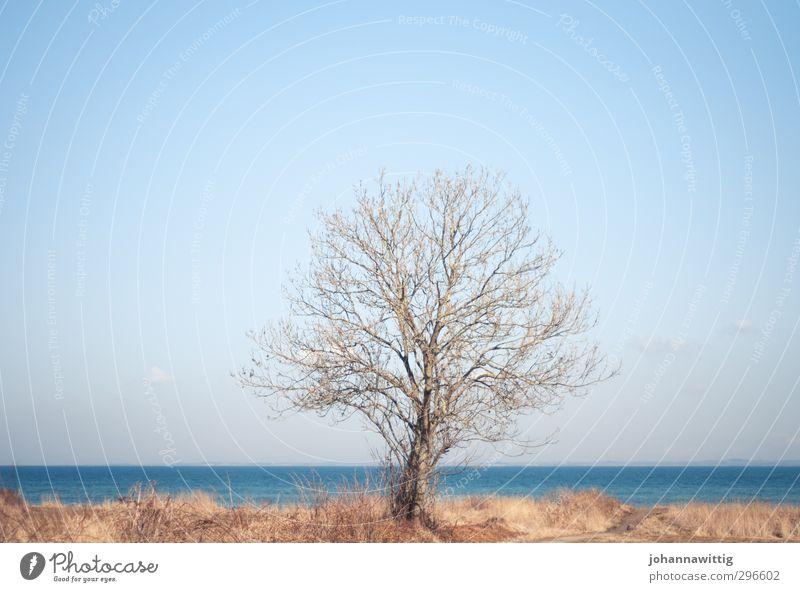 loslassen Umwelt Natur Landschaft Erde Wasser Himmel Wolkenloser Himmel Horizont Sonne Frühling Schönes Wetter Park Wiese Küste Strand Ostsee Meer authentisch