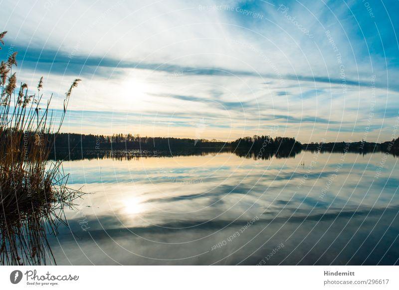 Symmetrie ... Natur Pflanze Urelemente Luft Wasser Himmel Wolken Horizont Sonne Frühling Wetter Schönes Wetter Baum Schilfrohr Küste Seeufer Bucht Abtsee Dorf