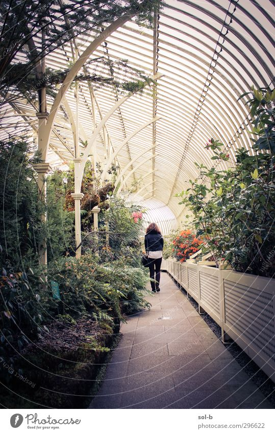 Jaynie Bac exotisch Garten feminin Junge Frau Jugendliche 1 Mensch 18-30 Jahre Erwachsene Natur Pflanze Blume Sträucher Architektur laufen schön gelb grün