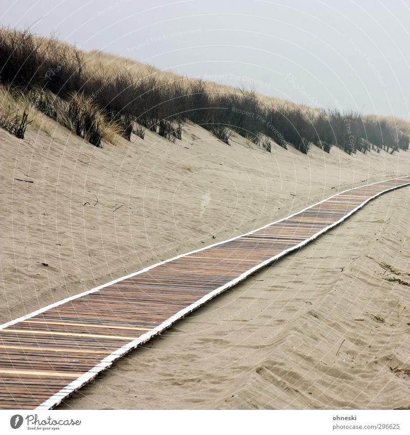 Wege und Pfade Strand Insel Sand schlechtes Wetter Nordsee Düne Dünengras Stranddüne Langeoog Wege & Pfade Holzweg Einsamkeit Farbfoto Gedeckte Farben