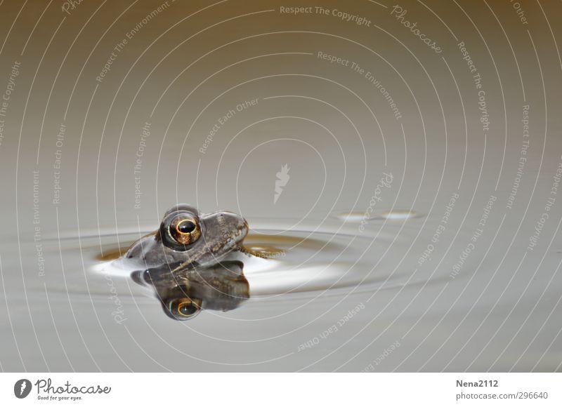 Hey Sonne! Wiederkommen!!! Umwelt Natur Wasser Frühling Wetter schlechtes Wetter Teich Tier Frosch 1 Schwimmen & Baden warten kalt nass grau Einsamkeit Kröte
