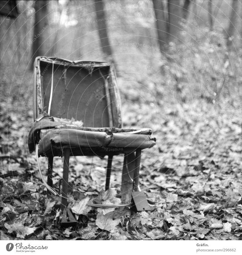 Waldsitz Umwelt Landschaft Herbst Blatt Stuhl Metall alt dehydrieren kaputt trashig grau schwarz weiß Zerstörung Schwarzweißfoto Menschenleer