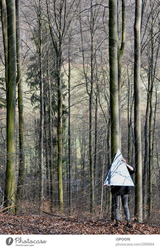 WALD Mensch feminin Junge Frau Jugendliche Körper Arme Hand Beine 1 18-30 Jahre Erwachsene Umwelt Natur Baum Wald leuchten stehen ästhetisch außergewöhnlich